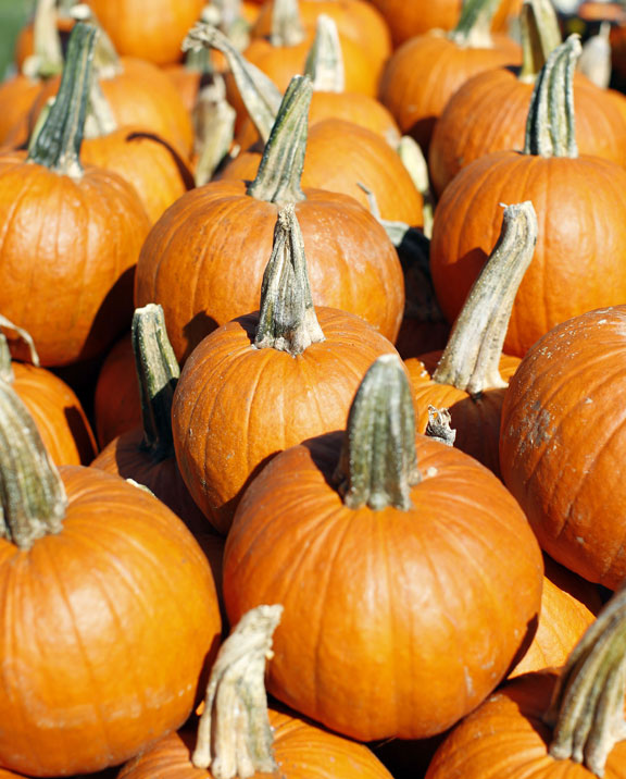 Pumpkin patches return for season