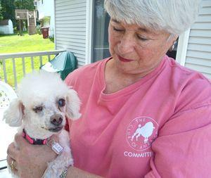 Rescuer looking for homes, donations for poodles