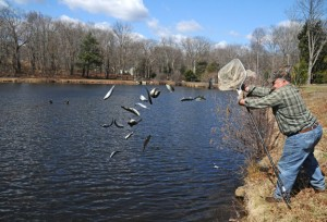Naugatuck Fishing Derby Chairman Dan Hennessey stocks Baummer's Pond Wednesday in preparation for the 23rd Annual James Hennessey Sr. Memorial Fishing Derby. –LUKE MARSHALL