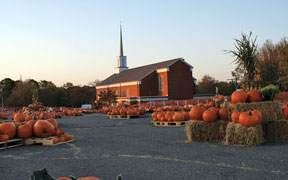 Pumpkin Patch back for fifth year
