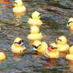 FEAT_Duck